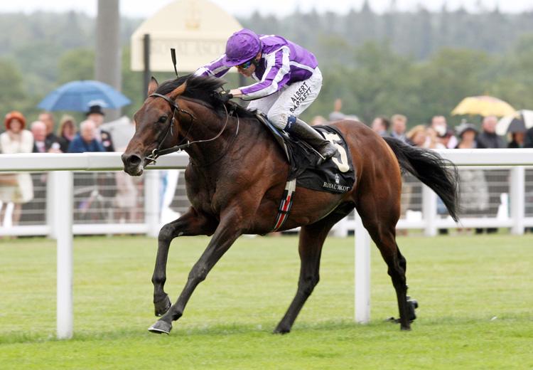 Thoroughbred horse, Racehorse, Horses
